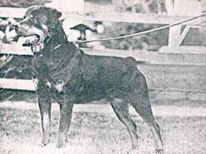 en 1945