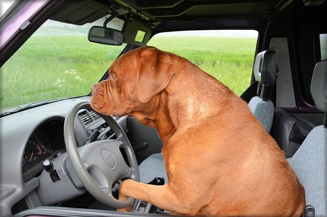 Le chien et la voiture tout une histoire