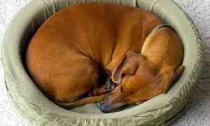 Comment avoir un gros chien en appartement ? 6 Conseils et astuces !