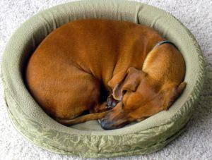 Comment avoir un gros chien en appartement ? - Un bon repère, un coussin pour chien