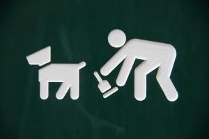 Comment avoir un gros chien en appartement ? Ramassez vos crottes :)