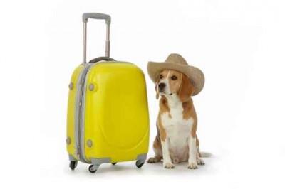 Partir en vacances avec son chien en voiture un plaisir !