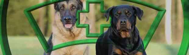Les maladies du Rottweiler - Les 15 Maladies de ce molosse