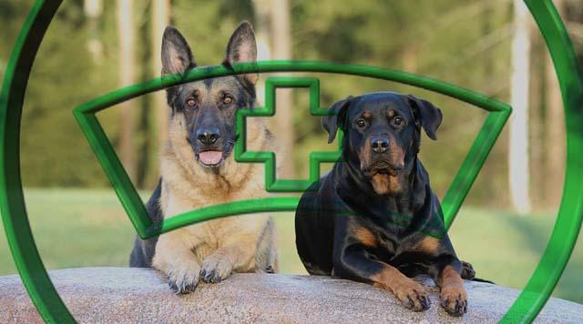 assurance pour le Rottweiler, une mutuelle complémentaire