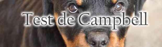 Mieux choisir son chiot Rottweiler avec le Test de Campbell