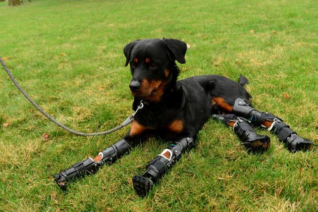Brutus le chien bionique