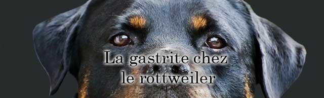 La gastrite chez le chien et chez le rottweiler