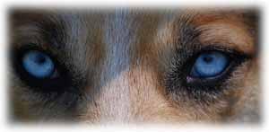 5 idées reçues sur les chiens : Il ne faut pas regarder un chien inconnu dans les yeux