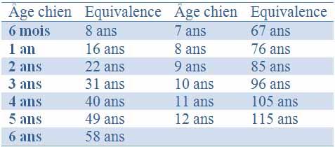 L'âge pour les chiens supérieur à 40 Kg