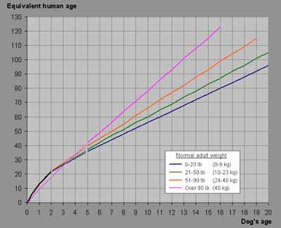 la courbe de l'âge de chien par rapport à l'âge humain; données via Wikipedia