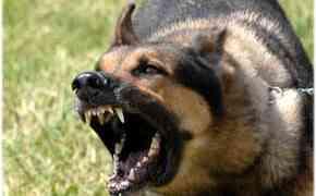 Pourquoi votre chien aboie, comment gérer les aboiements et éviter les problèmes avec les voisins ?