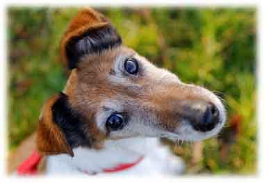 Un chien baisse la tête, ou l'incline sur le côté