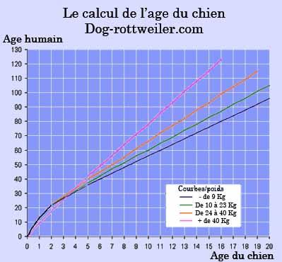 la véritable courbe de l'âge du chien