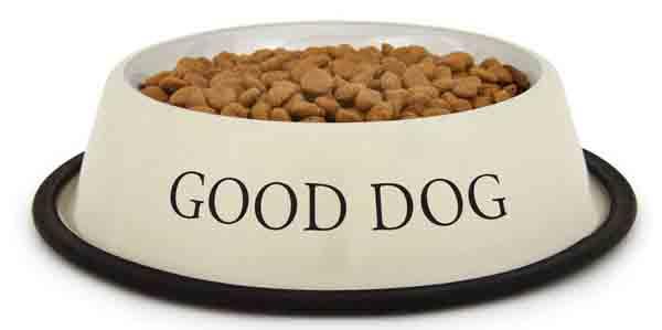 Conclusion sur l'alimentation sèche et les croquettes pour mon chien
