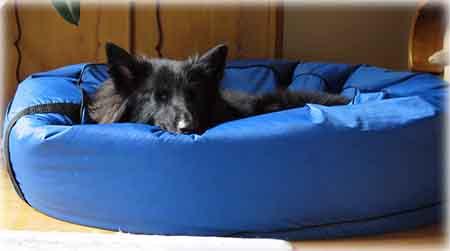 Un lit pour chien que l'on peut mettre dans la voiture