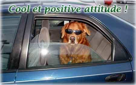 le chien avec la voiture - Toujours positif et rester zen