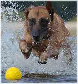 jouet pour chien résistant