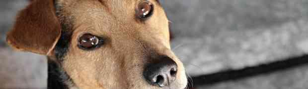 Contacter un vétérinaire en ligne : Les avantages pour votre chien