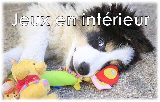 Guide coplet des jeux jeux en intérieur pour chien pour jouer et se dépenser