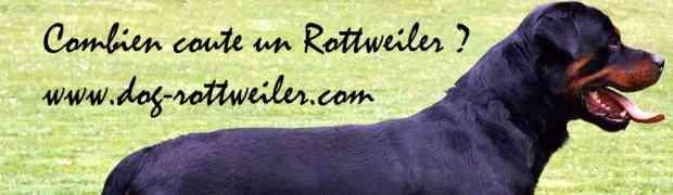 Combien coute un rottweiler - le prix du rottweiler