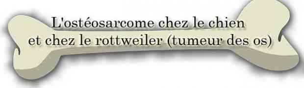 L'ostéosarcome chez le chien et chez le rottweiler (tumeur des os)