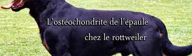 L'ostéochondrite de l'épaule chez le chien et chez le rottweiler