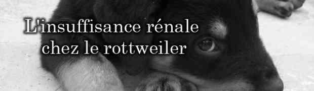 L'insuffisance rénale chez le chien et chez le rottweiler