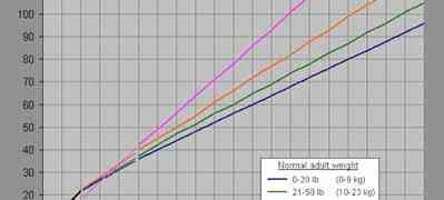 Comment calculer l'âge du chien en équivalence humain - La vérité !