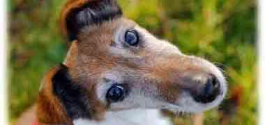 Qu'en est-il réellement du parfum pour chien?