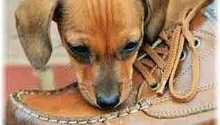 Est-ce que on chien est hyperactif ? Quels sont les symptômes ?