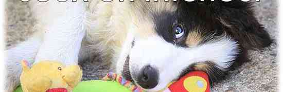 Quelques jeux en intérieur pour chien pour jouer avec votre chien en intérieur