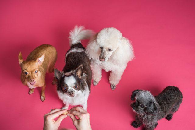 Comment choisir ses croquettes pour chien ? guide complet pour bien prendre les bonnes croquettes