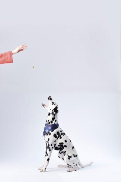 Comment choisir ses croquettes pour chien ? Doit on envoyer des croquettes dans la gueule de notre chien ? tel est la question :)