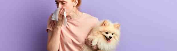 Pourquoi mon chien sent-il mauvais ? Le tartre ? Une affection ?