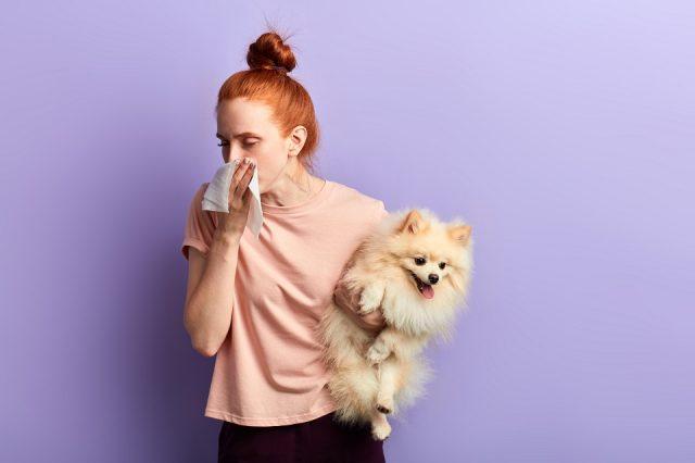 Pourquoi mon chien sent-il mauvais ? Le tarte dentaire ?